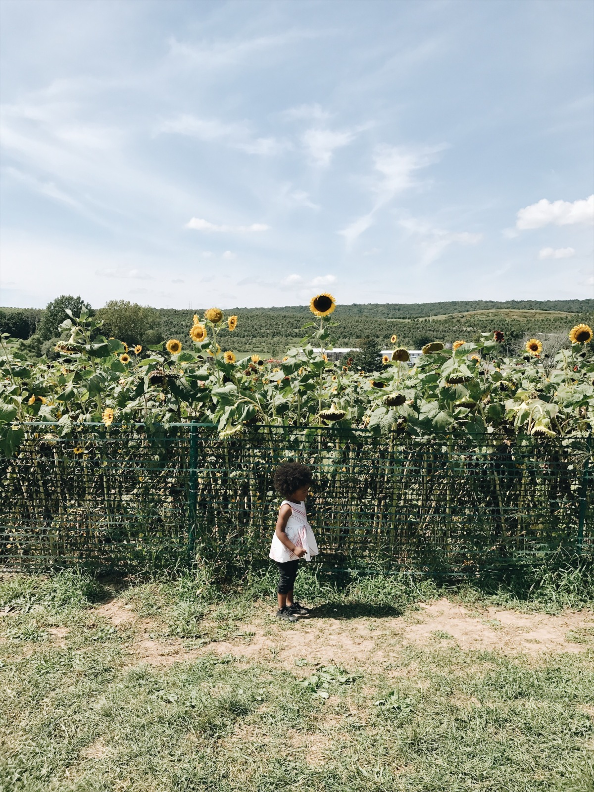 Day In The Life: LymanOrchards